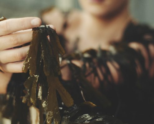 Research into the benefits of seaweed on skin cells - Technology Gateway and Voya